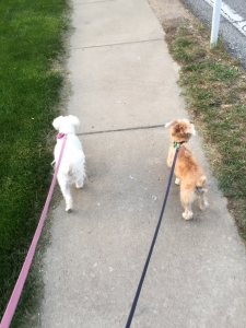 dogs_walk_IMG_1782