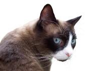 curious-cat-cutout-1405973