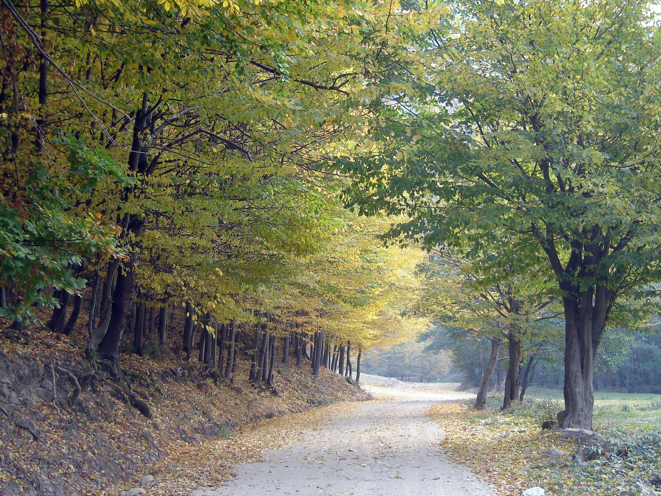 autumn-1178587