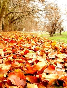 autumn-1402893