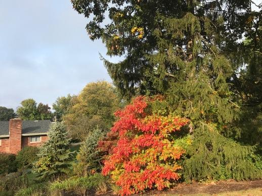 autumn2-1-1
