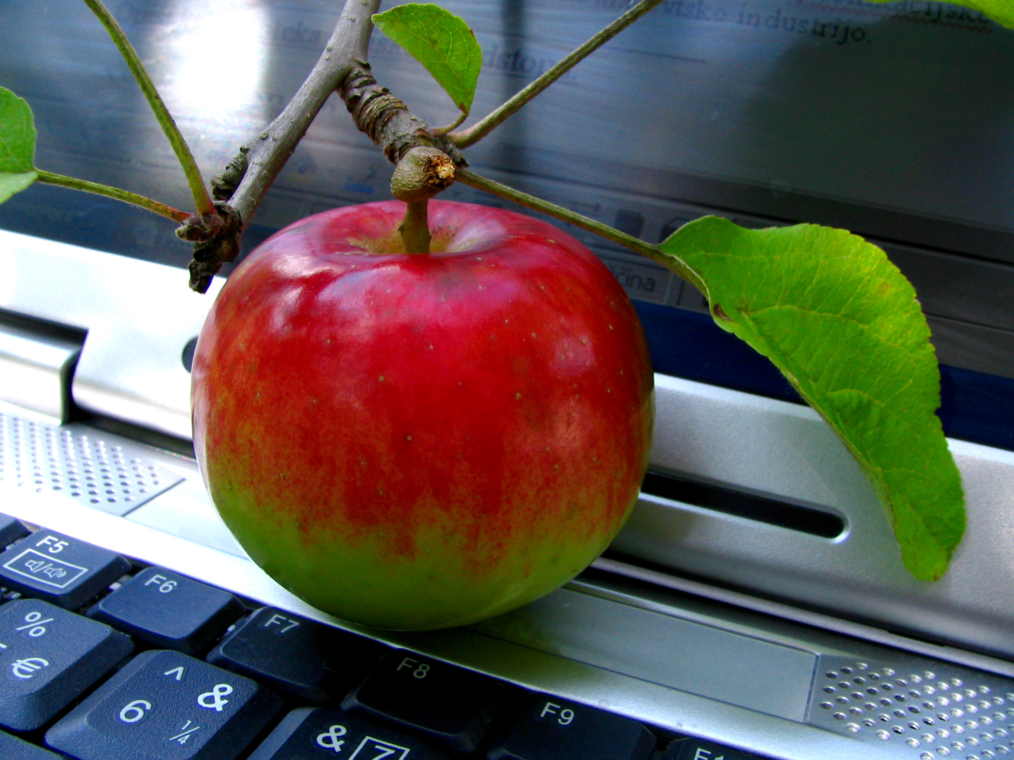 computer-and-apple-1241514 Ales Cerin