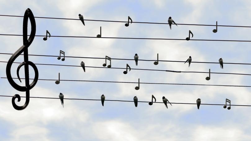 birds-2672101_1920_Dieter_G