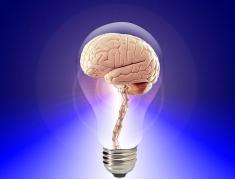 brain-20424_640_PublicDomainPictures