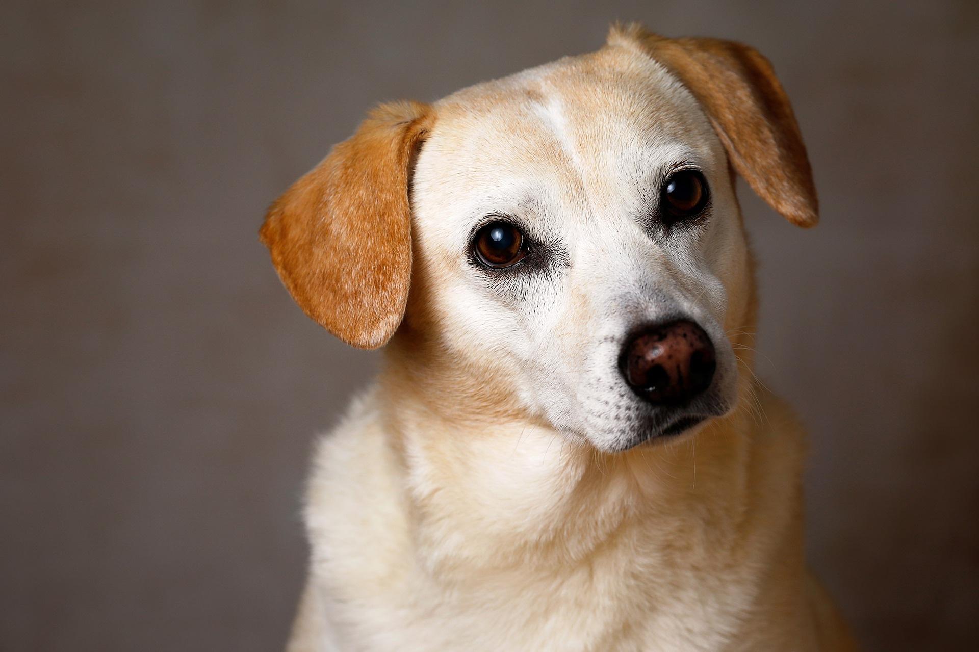 dog-3108509_1920_groesswang