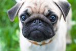 dog-3243734_1920_kandykandoo
