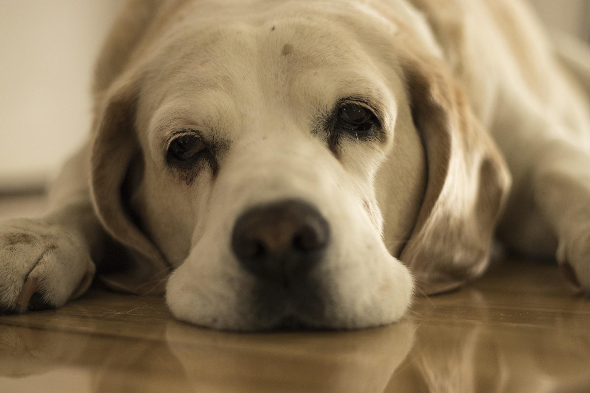 dog-4607655_1920_DrawnByShaun