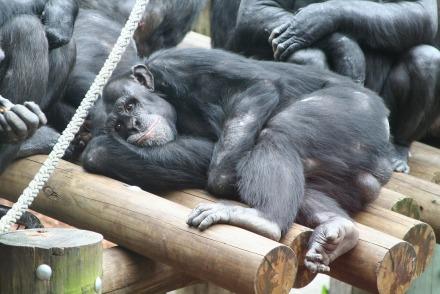 monkey-1171394_1920_kachi